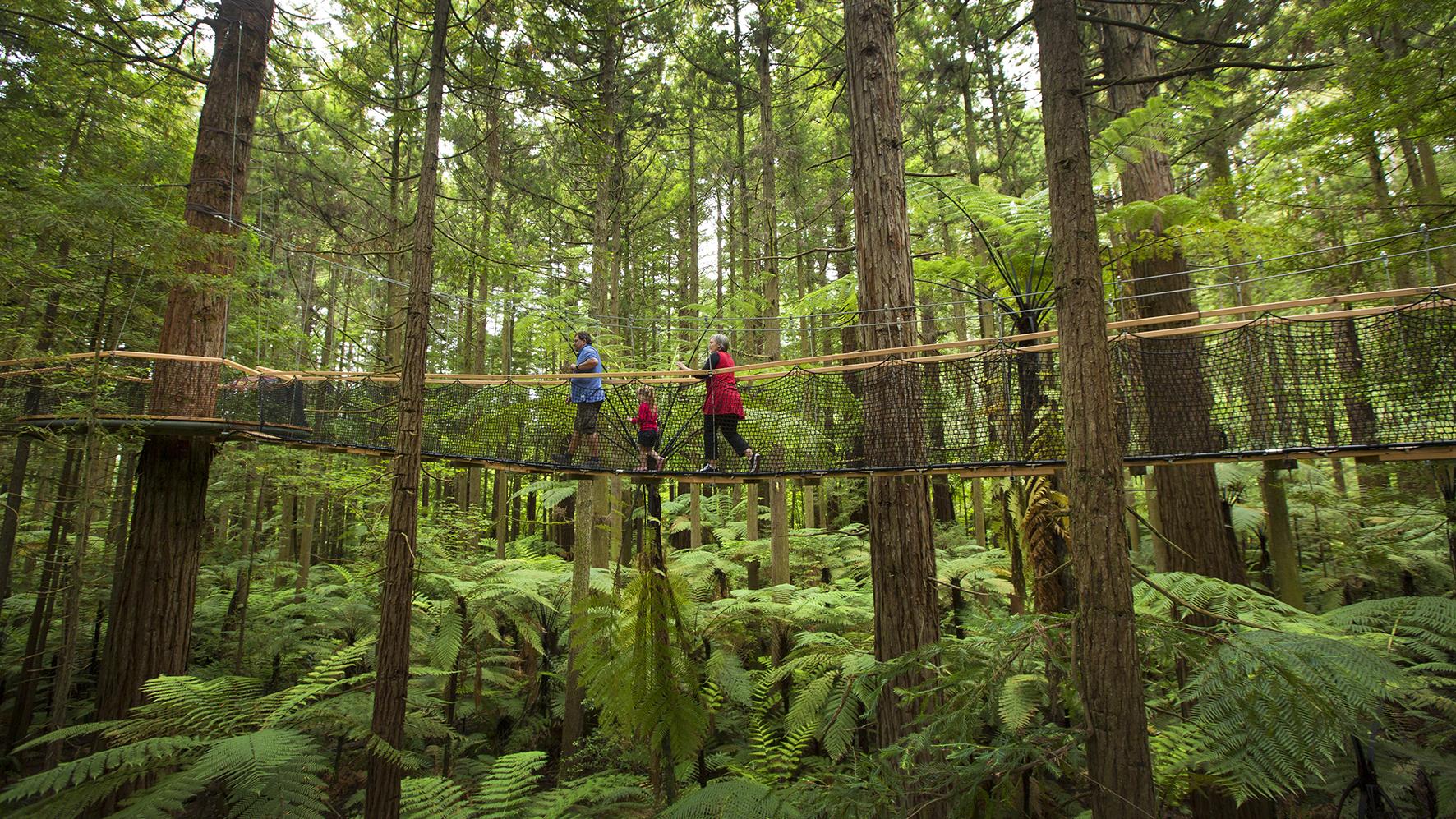 0055 Redwoods Treewalk Rotorua Tourism Media 1