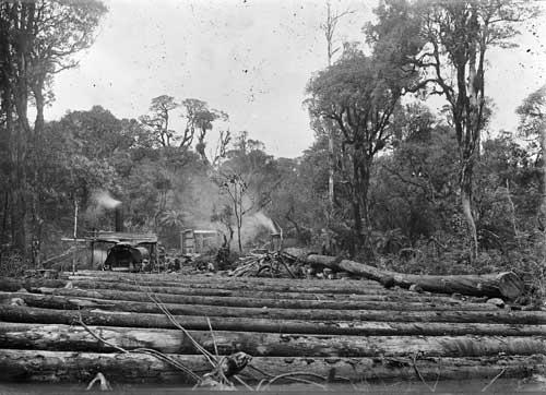 Logging in Te Ara